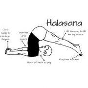 Halasana poz 1 180x180 - Padmasana (Lotus Pozu)