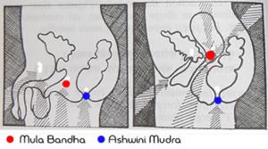 mula bandha 300x167 - Kurma Nadi (Kaplumbağa Kanalı)